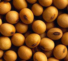 лецитин снижает холестерин